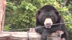 Campuchia đạt tiến bộ trong việc kiểm soát hoạt động buôn gấu