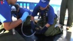 Resgate de Leões Marinhos na Califórnia