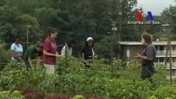 Kentlerin İçinde Tarım Alanları Açılıyor