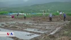 چاندنی برنجی کوردی لە دەڤەری ئامێدی ڕوو لە زیادبوونە