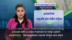 Anh ngữ đặc biêt: Senegal Illegal Fishing (VOA-Ag)
