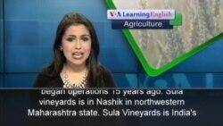 More Indians Enjoy Wine
