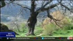 Shqetësimi për gjendjen e pyjeve në Shqipëri