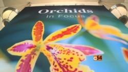 Orchids in Focus