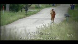 โปรดติดตาม รายงานพิเศษ พระสงฆ์ไทยเดินเพื่อสันติภาพข้ามอเมริกา