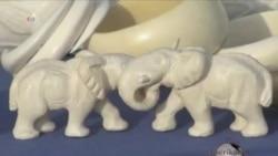 Fil sümüyünün satılışına qadağa qoyulur