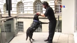 Այս հերոս շունն առաջինն է վնասազերծել Սպիտակ տուն ներխուժել փորձող անձին