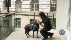 Собаку, який колись врятував президентську родину, нагородили орденом за заслуги. Відео