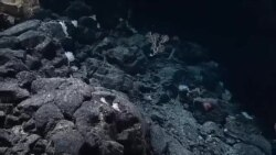 Watch as NOAA scientists discover the largest sponge ever found