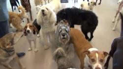 'รีสอร์ตสุดหรูสำหรับน้องหมา' เอาใจคนรักสัตว์