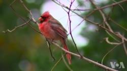 鸟类是人与自然连接的纽带