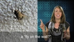 English in a Minute: Fly on the Wall
