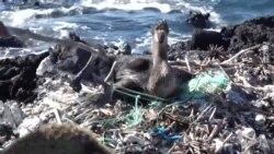 一步一个脚印 打击塑料污染