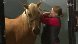 Ֆերմաների ձիերը հրդեհներից պատսպարվում են ձիարշավարաններում