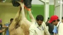 ԱՌԱՆՑ ՄԵԿՆԱԲԱՆՈՒԹՅԱՆ. Դուբայում ուղտերի համար նախատեսված հիվանդանոց է գործում