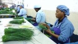 Sekta ndogo ya kilimo Tanzania yarikodi ongezeko la mauzo ya nje