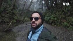 Fern Kanyonu