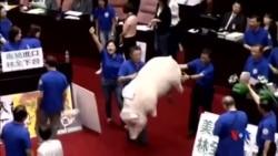 2016-05-31 美國之音視頻新聞: 國民黨立委阻攔台灣新任行政院長施政報告