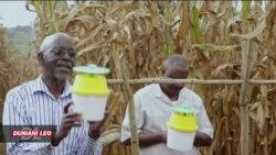 Wakulima nchini Uganda wanaungana na wenzao kuanza kutumia taaluma ya kisasa kuzuwia mashambulizi wa viwavijeshi