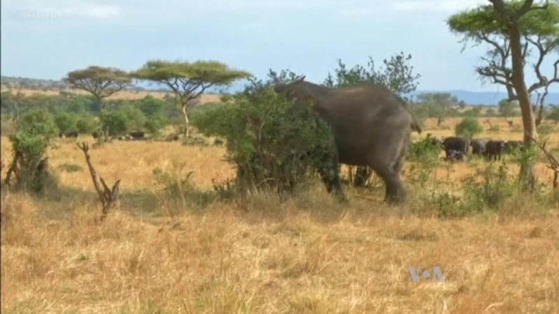 Using Tech to Save World s Most Endangered Species in Tanzania