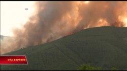 Cháy rừng kinh hoàng ở Bồ Đào Nha, ít nhất 62 người chết