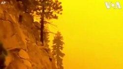 Пожар кај познатото калифорниско езеро Тахо