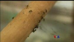ဖေလာ္ရီဒါျပည္နယ္နဲ႔ Zika ဗုိင္းရပ္စ္ပိုး သတိေပးခ်က္