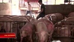 Việt Nam phạt trang Facebook đưa tin 'thất thiệt' về dịch tả lợn châu Phi