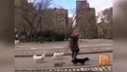 Люди и собаки: связь на биохимическом уровне
