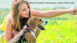 Eye Contact Secures Dog's Place in Human Heart