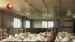 禽流感陰影籠罩,中國宰殺2萬隻雞