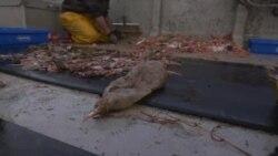 Шпански рибари ги полнат мрежите со риби и пластика