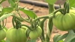 'Dünyada Üretilen Gıda Maddelerinin Yarısı İsraf Ediliyor'