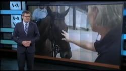Вікно в Америку: Як готують до служби коней-поліцейських