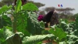 Agricultura digital asequible para el mundo