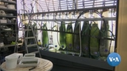 Seaweed Could Help Produce Biodegradable Plastic