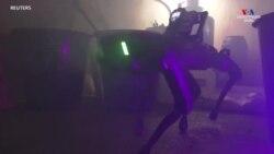 Հոլանդիայում թմրանյութերի գործարանի հետազոտման համար ոստիկաններն օգտագործում են Robodog անվանումով ռոբոտին