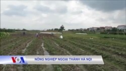 Nông nghiệp ngoại thành Hà Nội