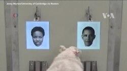 Cừu có thể nhận diện được người?