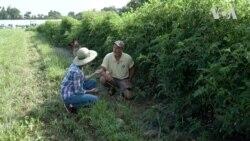 Як українським фермерам отримати сертифікацію США для органічних харчів? Відео