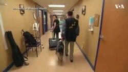 Собаки-терапевты помогают пациентам в США