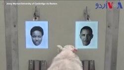 بھیڑ انسانی چہرے پہچان سکتی ہے