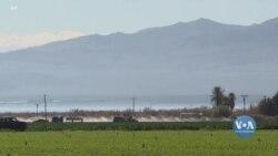 Новий етап вакцинування аграріїв у Каліфорнії. Відео