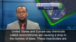 Widely-Used Insecticide Is Damaging Wild Bee Populations