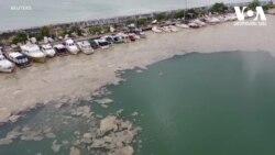 მარმარილოს ზღვის დაბინძურება საფრთხეს შავ ზღვასაც უქმნის