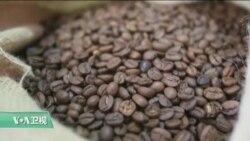VOA连线:研究显示喝咖啡可能有助长寿