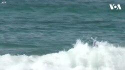 Chó thi lướt sóng