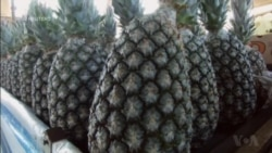 The Healing Properties of Pineapples