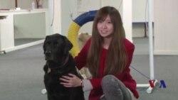 走进美国:美国的协助犬是怎样炼成的