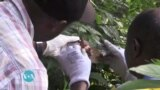 Maisha na Afya Ep. 85: Virusi vya Marbug